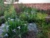 marys-irises-hummingbird-sages-miners-lettuce-and-flowering-currants