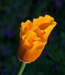 ledgerwood-blooms-3