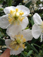oaktown-native-plant-nursery-1-of-5-4