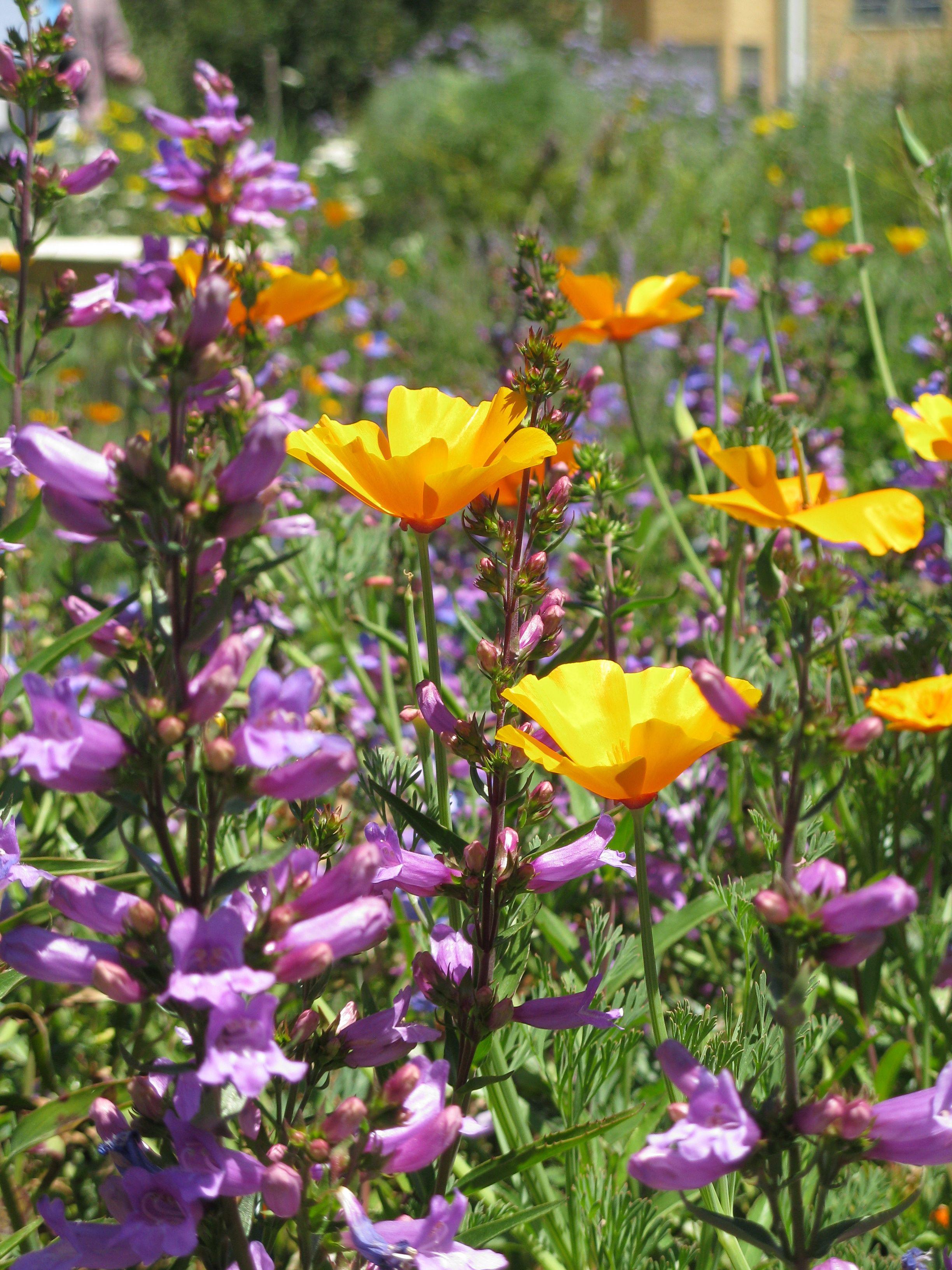 High Quality California Native Bee Garden