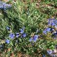 blue_springs-penstamon3