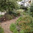 California native plant front yard garden in urban drought tolerant low maintenance small space lawn alternative