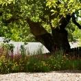 bbn-2011-ledgerwood-9