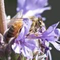 ledgerwood-bees-1