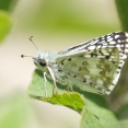 ledgerwood-moths-etc-2