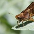 ledgerwood-moths-etc-8