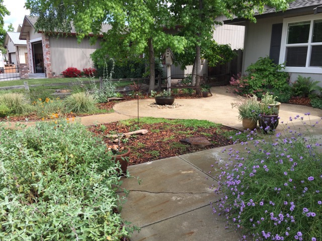 Good ... The Natives Garden Tour Participant And Volunteer Lori Is A Fifth  Generation Californianu2014so When She Decided To Sheet Mulch The Lawn During  The Drought, ...